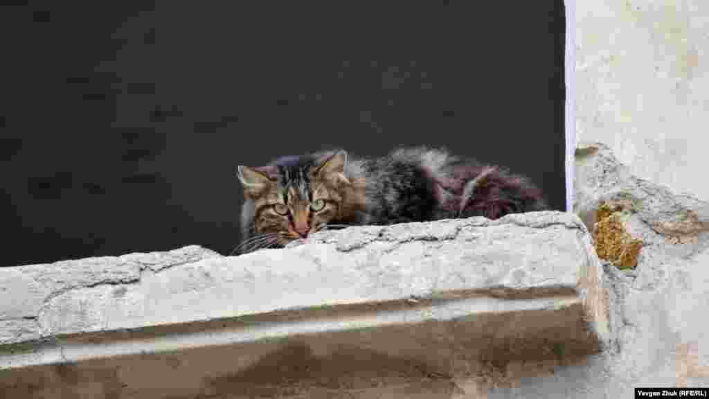 Суровый уличный кот наблюдает из окна