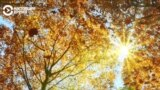 Картон из листьев: как идея подростка превратилась в производственную линию