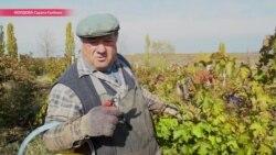 Пять долларов в день, но доллар идет на налоги: как и сколько зарабатывает сельская Молдова?