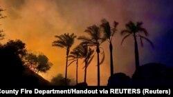Шумски пожари во САД