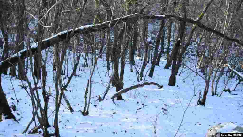 Выпавший снег припорошил окружающий озеро лес