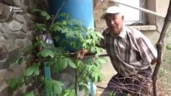 Гранат и павловния в Нарыне. Бывший бухгалтер преуспел в тепличном бизнесе