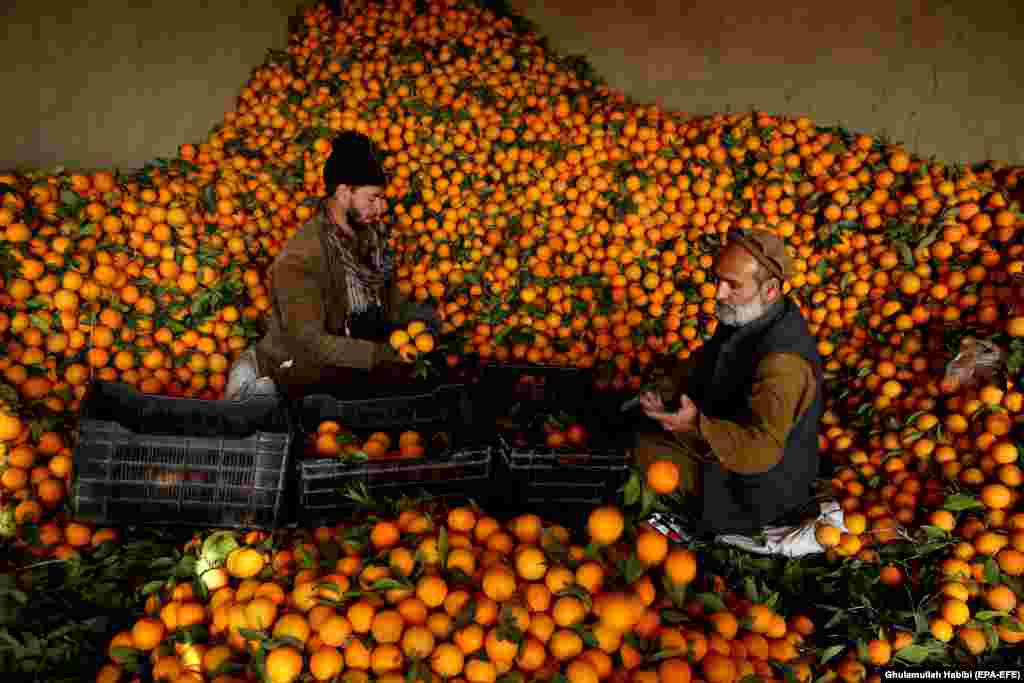 Afghan vendors sort oranges for sale at a market in the Bati Kot district in Nangarhar Province. (epa-EFE/Ghulamullah Habibi)