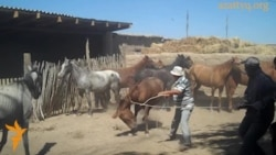 Лошади и пиявки