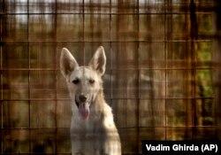 Bucureștiul găzduiește 50.000 de câini vagabonzi.