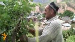 Пиллапарварӣ дар Тоҷикистон: Шуғле фақат ба хотири ҳезум?
