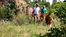 «Зоопарк» крымского бизнеса (видео)