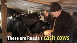 Russia's Cash Cows