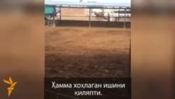 """Чинозда Аҳмадбойга тегишли ферма """"талон-тарож"""" қилинди"""