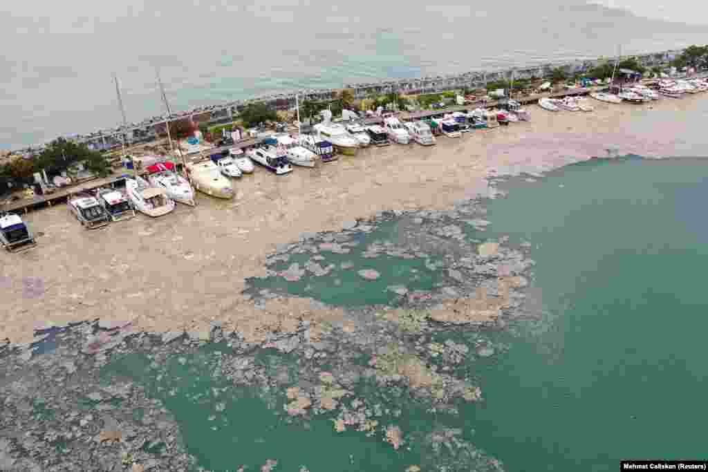 Через толстый слой грязи из органических веществ, известный как морская слизь,не проходит кислород, в результате чего гибнет рыба и другие морские обитатели