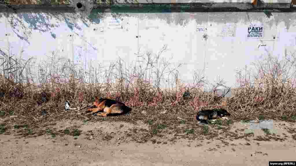 Місцеві собаки відпочивають на сонечку. За кілька кроків звідси розташований пляж