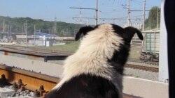 Робітники перекрили залізничним міст у Києві
