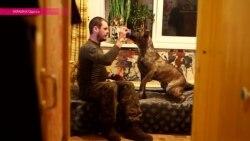 Как Одесса спасала собаку солдата-добровольца