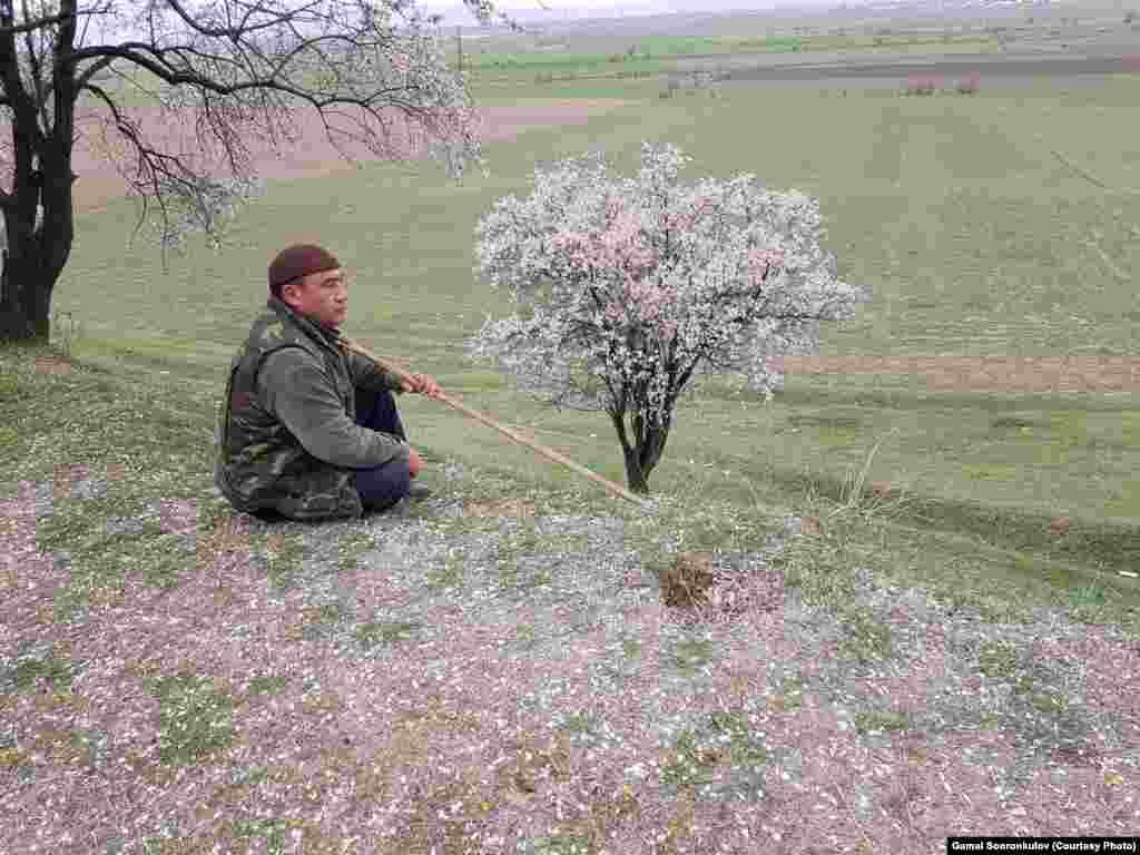Эколог Гамал Сооронкулов бадам токоюнда.