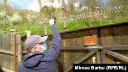 Mircea Samson montează firul electric peste gardul gospodăriei sale din Ojdula.