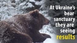 Hope For Ukraine's Abused Bears