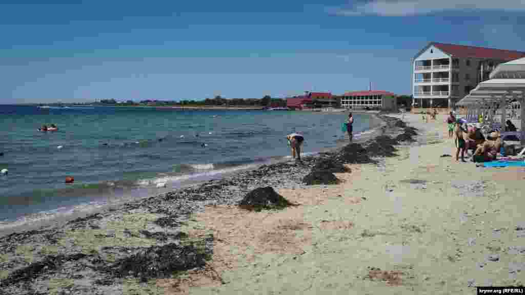 Після зимових штормів на пляжах залишилися гори водоростей