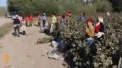 Пахтазор Африка