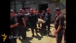Тбилиси полицияси одамга ташланган йўлбарсни ўлдирди