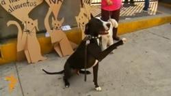 Мексиканські собаки протестують