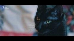 Активісти завели для Олександра Кольченка кота, який чекає на політв'язня в Україні