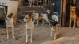 Kazakhstan - Animal shelter whose owner died. Almaty.