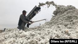 Мақта қабылдайтын орындағы қырманда жұмыс істеп жүрген адамдар. Түркістан облысы, 29 қыркүйек 2020 жыл.