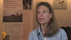 Гибель сайги: западные ученые проверяют «все версии»