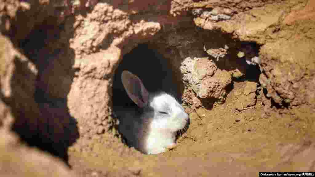 Но зверьки самостоятельно роют себе кроличьи норы, поэтому, перемещаясь по парку, нужно внимательно смотреть под ноги