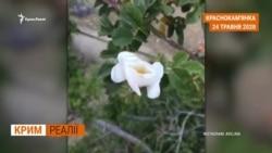 У Криму зникає підземна вода? (відео)