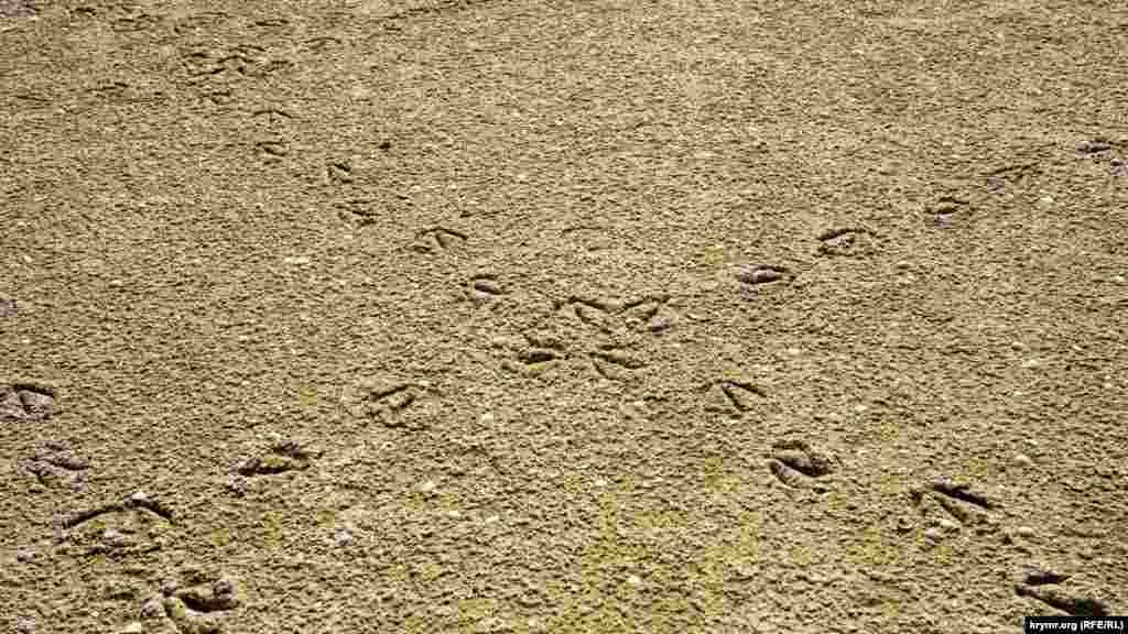 Птичьи «диагонали» на соленом песке