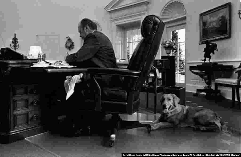 7 ноября 1974 года. Джеральд Форд, 38-й президент Соединенных Штатов, и его пес Либерти работают в Овальном кабинете Белого дома в Вашингтоне