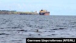 Морской котик. Бухта Обманная. Хабаровский край