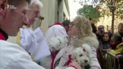 Домашні улюбленці в Мадриді отримали благословення – відео