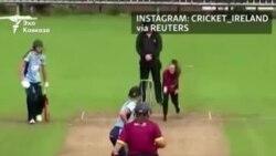 Кокер-спаниель решил поиграть в крикет
