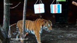 Матч Хорватия-Англия: прогнозы животных (видео)