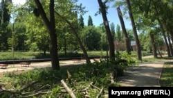 В ходе реконструкции территории многие деревья подверглись обрезке, а некоторые были вырублены