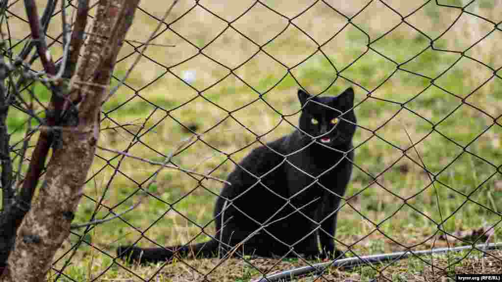 Чорний кіт у кримському селі Шевченкове