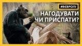 «Нагодуй звірятко онлайн»: зоопарки Чехії – у скруті через відсутність відвідувачів (відео)