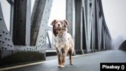 A kutyasétáltatók felmentést kaphatnak a kijárási korlátozás alól, a részletekről az önkormányzatok dönthetnek.