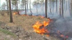 Лесные пожары в Иркутской области уничтожили около 600 гектаров леса