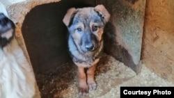 Бездомная собака в «Астана Ветсервис», предприятии, которому государство платит за «отлов и уничтожение животных».