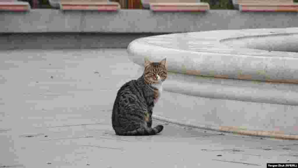 Біля фонтану відпочиває бульварний кіт