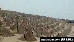Кладбище умерших от коронавируса в Туркменистане, где власти отрицают существование эпидемии. Июль 2020 года.