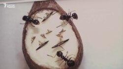 Микроскоппен көретін туындылар