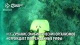 """Ученые создали бота, который может """"восстанавливать"""" рифы"""