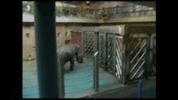 Обогащение среды слонов в Московском зоопарке