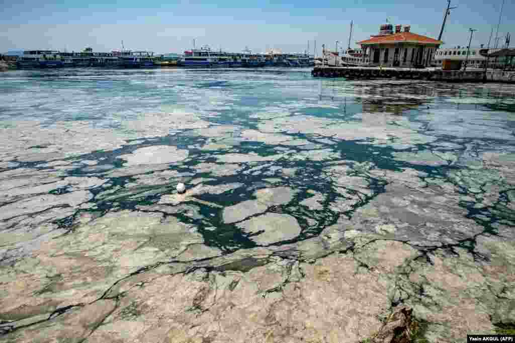 Министр окружающей среды Турции Мурат Курум также предупредил, что все Мраморное море будет объявлено охраняемой территорией