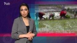 Kasıblar dad edir: Sosial yardım verilmir