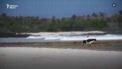 Галапагоските острови под карантина: Рай за местните животни